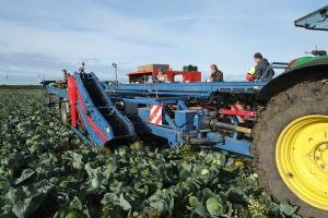 Комбайны для уборки капусты